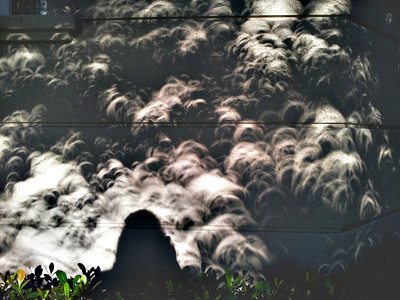 My shadow surrounded by eclipses projecting through the shadows.